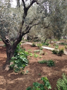 eeeeeddgarden of gethsemane