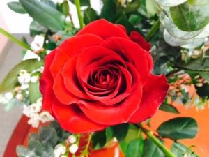 Roses 2..